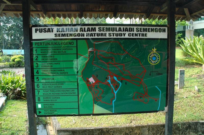 expeditions indonesia detail palangkaraya orangutan fundraiser