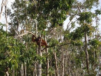 A photo journey through Palangkaraya & Sabangau Forest