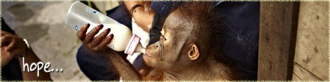 Hope Orangutan Odysseys