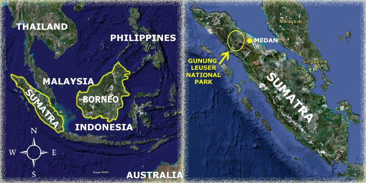 Gunung Leasur Orangutan Odysseys