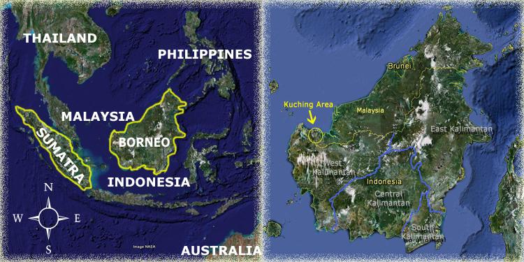 Sarawak Map Orangutan Odysseys