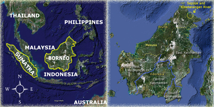 Sepilok Map Orangutan Odysseys