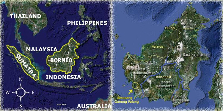Ketapang Map Orangutan Odysseys