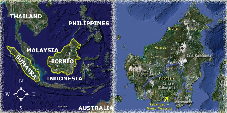 Palangkaraya Map Orangutan Odysseys